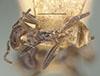 http://mczbase.mcz.harvard.edu/specimen_images/entomology/large/MCZ-ENT00021357_Azteca_velox_had.jpg