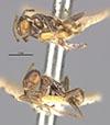 http://mczbase.mcz.harvard.edu/specimen_images/entomology/large/MCZ-ENT00021357_Azteca_velox_hala.jpg