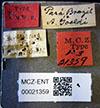 http://mczbase.mcz.harvard.edu/specimen_images/entomology/large/MCZ-ENT00021359_Azteca_virens_lbs.jpg