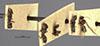 http://mczbase.mcz.harvard.edu/specimen_images/entomology/large/MCZ-ENT00021383_Tapinoma_opacum_halc.jpg