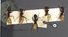 http://mczbase.mcz.harvard.edu/specimen_images/entomology/large/MCZ-ENT00021472_Camponotus_goeldii_hada.jpg