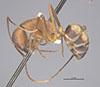 http://mczbase.mcz.harvard.edu/specimen_images/entomology/large/MCZ-ENT00021481_Camponotus_socius_var_osceola_hal.jpg
