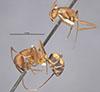 http://mczbase.mcz.harvard.edu/specimen_images/entomology/large/MCZ-ENT00021481_Camponotus_socius_var_osceola_hala.jpg