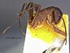 http://mczbase.mcz.harvard.edu/specimen_images/entomology/large/MCZ-ENT00021482_Camponotus_maculatus_impatibilis_hala.jpg