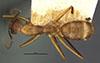 http://mczbase.mcz.harvard.edu/specimen_images/entomology/large/MCZ-ENT00021483_Camponotus_silvicola_had.jpg