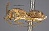 http://mczbase.mcz.harvard.edu/specimen_images/entomology/large/MCZ-ENT00021483_Camponotus_silvicola_hala.jpg