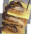 http://mczbase.mcz.harvard.edu/specimen_images/entomology/large/MCZ-ENT00021490_Camponotus_negus_thraso_var_nefasitensis_hala.jpg