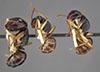 http://mczbase.mcz.harvard.edu/specimen_images/entomology/large/MCZ-ENT00021513_Camponotus_oetkeri_hala.jpg