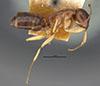 http://mczbase.mcz.harvard.edu/specimen_images/entomology/large/MCZ-ENT00021531_Camponotus_nitidus_montivagus_hal.jpg