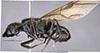 http://mczbase.mcz.harvard.edu/specimen_images/entomology/large/MCZ-ENT00021544_Camponotus_satan_hal.jpg