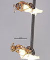 http://mczbase.mcz.harvard.edu/specimen_images/entomology/large/MCZ-ENT00021546_Camponotus_itoi_lighti_var_okamotai_hala.jpg
