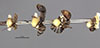 http://mczbase.mcz.harvard.edu/specimen_images/entomology/large/MCZ-ENT00021547_Camponotus_bedoti_hala.jpg