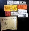 http://mczbase.mcz.harvard.edu/specimen_images/entomology/large/MCZ-ENT00021565_Camponotus_cordincola_lbsa.jpg