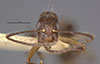 http://mczbase.mcz.harvard.edu/specimen_images/entomology/large/MCZ-ENT00021568_Camponotus_sexguttatus_basirectus_hefb.jpg