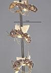 http://mczbase.mcz.harvard.edu/specimen_images/entomology/large/MCZ-ENT00021570_Camponotus_sexguttatus_var_unitaeniatus_hala.jpg