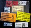 http://mczbase.mcz.harvard.edu/specimen_images/entomology/large/MCZ-ENT00021576_Camponotus_capperi_corticalis_var_subdepilis_lbsa.jpg