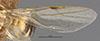 http://mczbase.mcz.harvard.edu/specimen_images/entomology/large/MCZ-ENT00021579_Camponotus_macilentus_var_castellanus_fwg.jpg