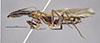 http://mczbase.mcz.harvard.edu/specimen_images/entomology/large/MCZ-ENT00021592_Camponotus_mirabilis_hal.jpg