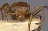 http://mczbase.mcz.harvard.edu/specimen_images/entomology/large/MCZ-ENT00021605_Camponotus_callistus_bradleyi_hef.jpg