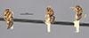 http://mczbase.mcz.harvard.edu/specimen_images/entomology/large/MCZ-ENT00021609_Camponotus_corniculatus_hala.jpg
