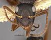 http://mczbase.mcz.harvard.edu/specimen_images/entomology/large/MCZ-ENT00021616_Camponotus_planus_var_sansalvadorensis_hef.jpg