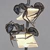 http://mczbase.mcz.harvard.edu/specimen_images/entomology/large/MCZ-ENT00021641_Calomyrmex_iridescens_hala.jpg