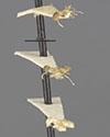 http://mczbase.mcz.harvard.edu/specimen_images/entomology/large/MCZ-ENT00022428_Brachymyrmex_cavernicola_halc.jpg