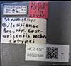 http://mczbase.mcz.harvard.edu/specimen_images/entomology/large/MCZ-ENT00022438_Strumigenys_lovisianae_costaricensis_lbs.jpg