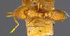 http://mczbase.mcz.harvard.edu/specimen_images/entomology/large/MCZ-ENT00022439_Strumigenys_lovisianae_guatemalensis_had.jpg