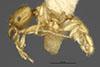 http://mczbase.mcz.harvard.edu/specimen_images/entomology/large/MCZ-ENT00022754_Pheidole_woodsmasoni_hal.jpg