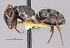 http://mczbase.mcz.harvard.edu/specimen_images/entomology/large/MCZ-ENT00022841_Camponotus_grandidieri_hala.jpg