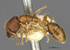 http://mczbase.mcz.harvard.edu/specimen_images/entomology/large/MCZ-ENT00023076_Typhlomyrmex_rogenhoferi_r_robustus_hal.jpg