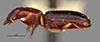 http://mczbase.mcz.harvard.edu/specimen_images/entomology/large/MCZ-ENT00023093_Clivina_grata_hal.jpg
