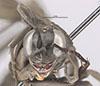http://mczbase.mcz.harvard.edu/specimen_images/entomology/large/MCZ-ENT00023476_Anoplius_modestus_hef.jpg