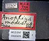 http://mczbase.mcz.harvard.edu/specimen_images/entomology/large/MCZ-ENT00023476_Anoplius_modestus_lbs.jpg