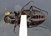 http://mczbase.mcz.harvard.edu/specimen_images/entomology/large/MCZ-ENT00023847_Notiophilus_simulater_hav.jpg