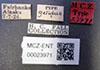 http://mczbase.mcz.harvard.edu/specimen_images/entomology/large/MCZ-ENT00023971_Agabus_gelidus_lbs.jpg