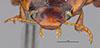 http://mczbase.mcz.harvard.edu/specimen_images/entomology/large/MCZ-ENT00023977_Agabus_triton_hef.jpg