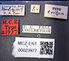 http://mczbase.mcz.harvard.edu/specimen_images/entomology/large/MCZ-ENT00023977_Agabus_triton_lbs.jpg