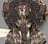 http://mczbase.mcz.harvard.edu/specimen_images/entomology/large/MCZ-ENT00025234_Conotrachelus_retusus_hef.jpg