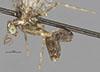 http://mczbase.mcz.harvard.edu/specimen_images/entomology/large/MCZ-ENT00025377_Plega_fratercula_hal.jpg