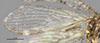 http://mczbase.mcz.harvard.edu/specimen_images/entomology/large/MCZ-ENT00025377_Plega_fratercula_hwg.jpg