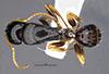 http://mczbase.mcz.harvard.edu/specimen_images/entomology/large/MCZ-ENT00026108_Camponotus_tricolor_had.jpg