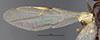 http://mczbase.mcz.harvard.edu/specimen_images/entomology/large/MCZ-ENT00026111_Camponotus_hapi_fwg.jpg
