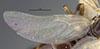 http://mczbase.mcz.harvard.edu/specimen_images/entomology/large/MCZ-ENT00026111_Camponotus_hapi_hwg.jpg