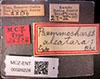 http://mczbase.mcz.harvard.edu/specimen_images/entomology/large/MCZ-ENT00026228_Psammochares_alcatara_lbs.jpg