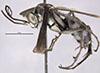http://mczbase.mcz.harvard.edu/specimen_images/entomology/large/MCZ-ENT00026229_Psammochares_caloderes_hal.jpg