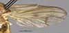 http://mczbase.mcz.harvard.edu/specimen_images/entomology/large/MCZ-ENT00027009_Renocera_amanda_fwg.jpg