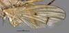 http://mczbase.mcz.harvard.edu/specimen_images/entomology/large/MCZ-ENT00027010_Renocera_johnsoni_fwg.jpg