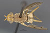 http://mczbase.mcz.harvard.edu/specimen_images/entomology/large/MCZ-ENT00027010_Renocera_johnsoni_had.jpg